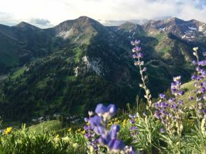 Looking at Alta from the Cardiff Pass hike, with beautiful purple wildflowers all around.