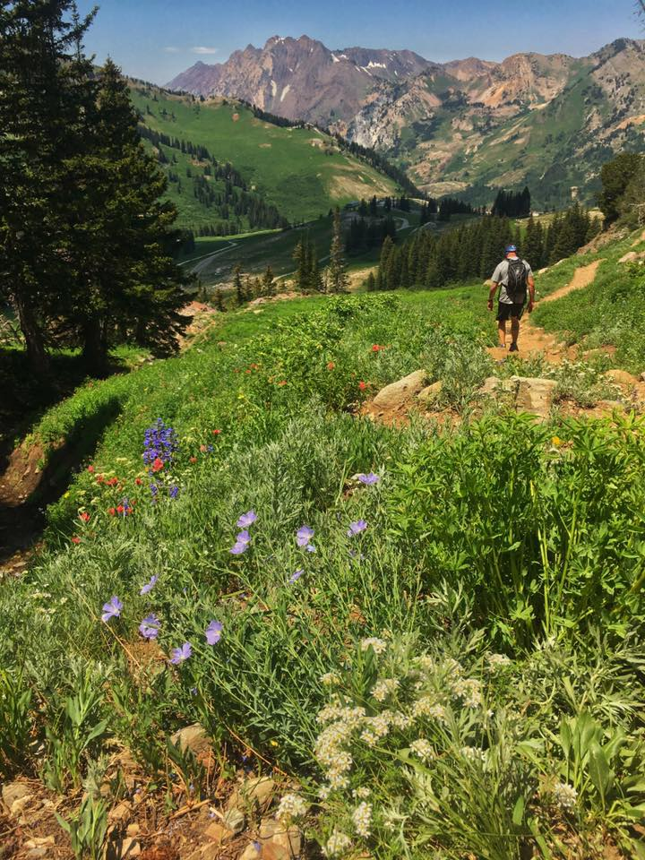 Hiking through Albion Basin's wildflowers with Mt. Superior in the background.